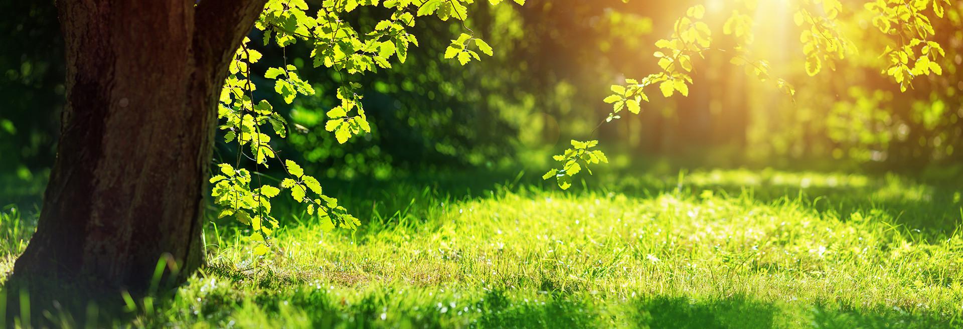 karton-green-vision.jpg