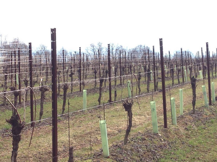shelter_vineyards_02_46.jpg